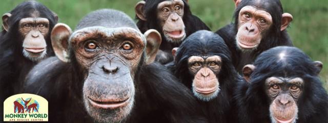 Slacklining at Monkey World